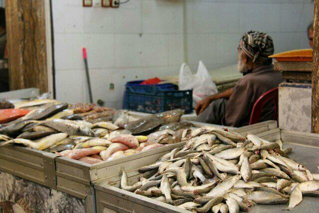 راه اندازی مراکز عرضه ماهی باقیمت مناسب در سطح شهر بندرعباس