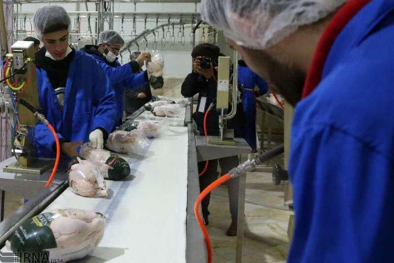 خبرنگاران 40 تن مرغ مازندران به عراق صادر شد