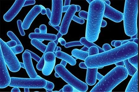 1.8 کیلوگرم میکروب در بدن یک فرد بالغ زندگی می نماید!