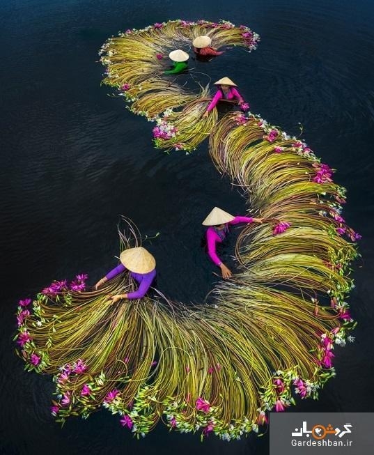 زنبق های آبی ویتنام، تماشای گل ارواح را از دست ندهید