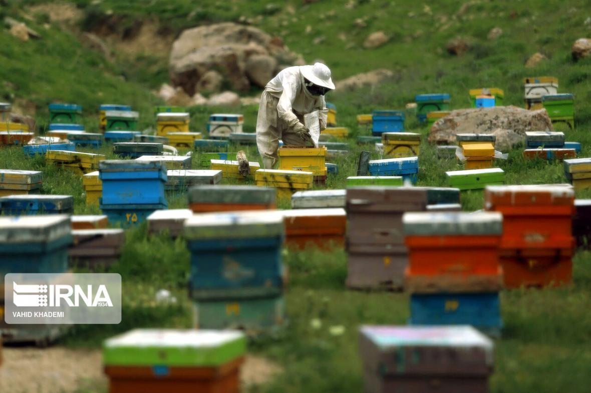 خبرنگاران 24درصد عسل آذربایجان شرقی را زنبورداران مراغه ای تولید می کنند