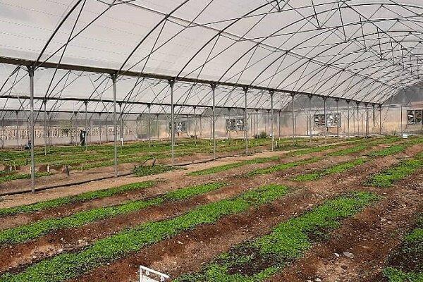 فناوران بومی سهم تولید داخل نهاده های گلخانه ای را افزایش می دهند